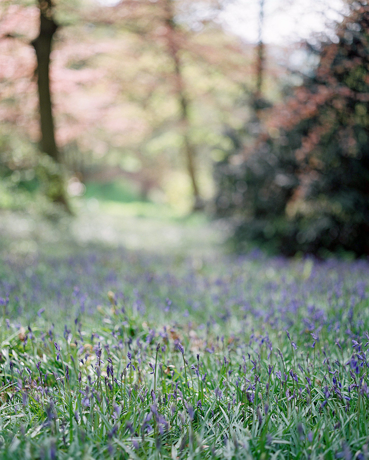 Chatsworth House in Spring Bluebells
