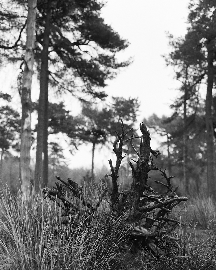 UK Film Photographer Ilford Delta UK Film Lab