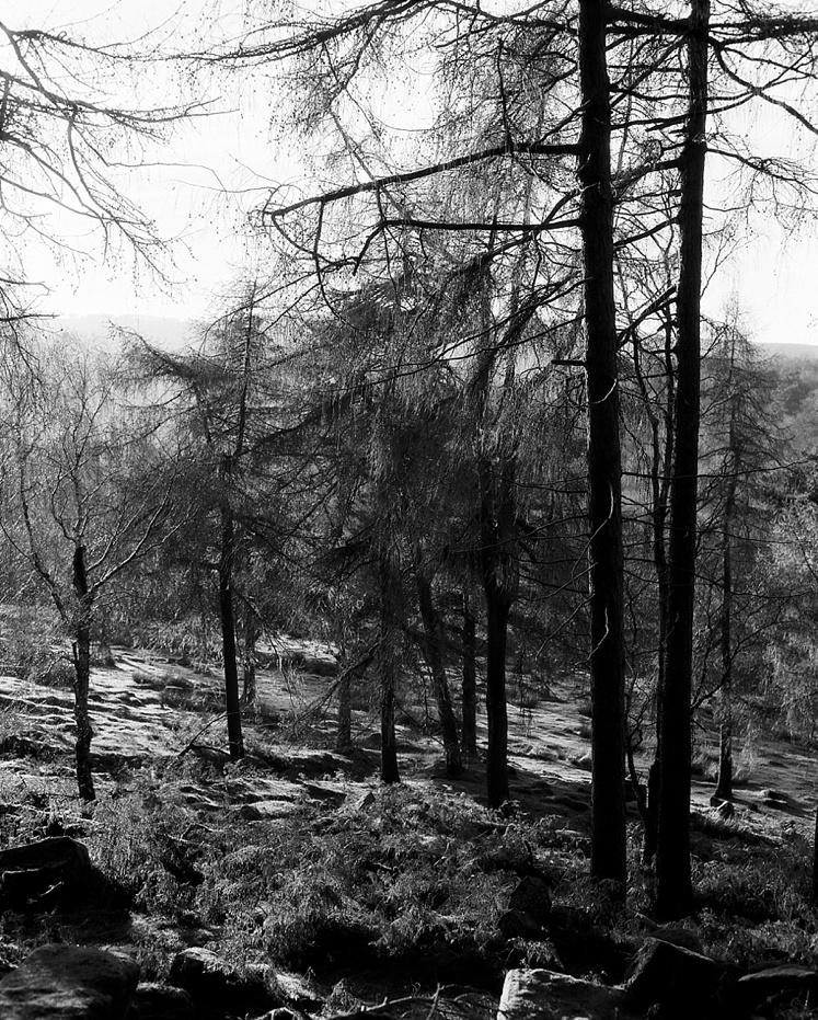 Longshaw estate Derbyshire Peak District_0001